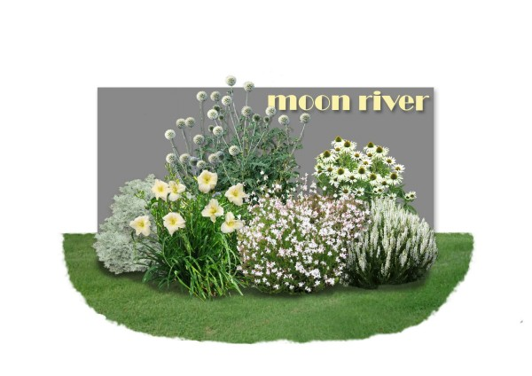Distel-Paket 'Moon River'