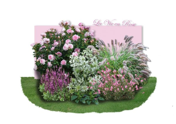 Distel-Paket 'La vie en Rose'